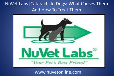 NuVet Labs | Cataracts In Dogs: What Causes Them And How To Treat Them Infographic