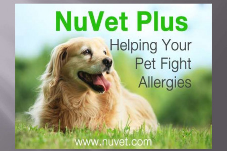 NuVet Plus Reviews: Dogs with Diabetes and How They Can Be Helped Infographic