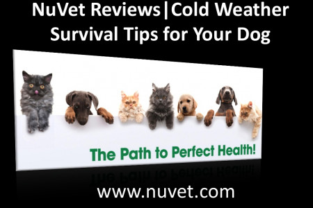 NuVet Reviews | Cold Weather Survival Tips for Your Dog Infographic