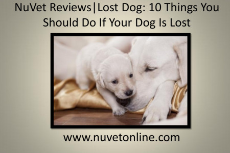 NuVet Reviews   Lost Dog: 10 Things You Should Do If Your Dog Is Lost Infographic
