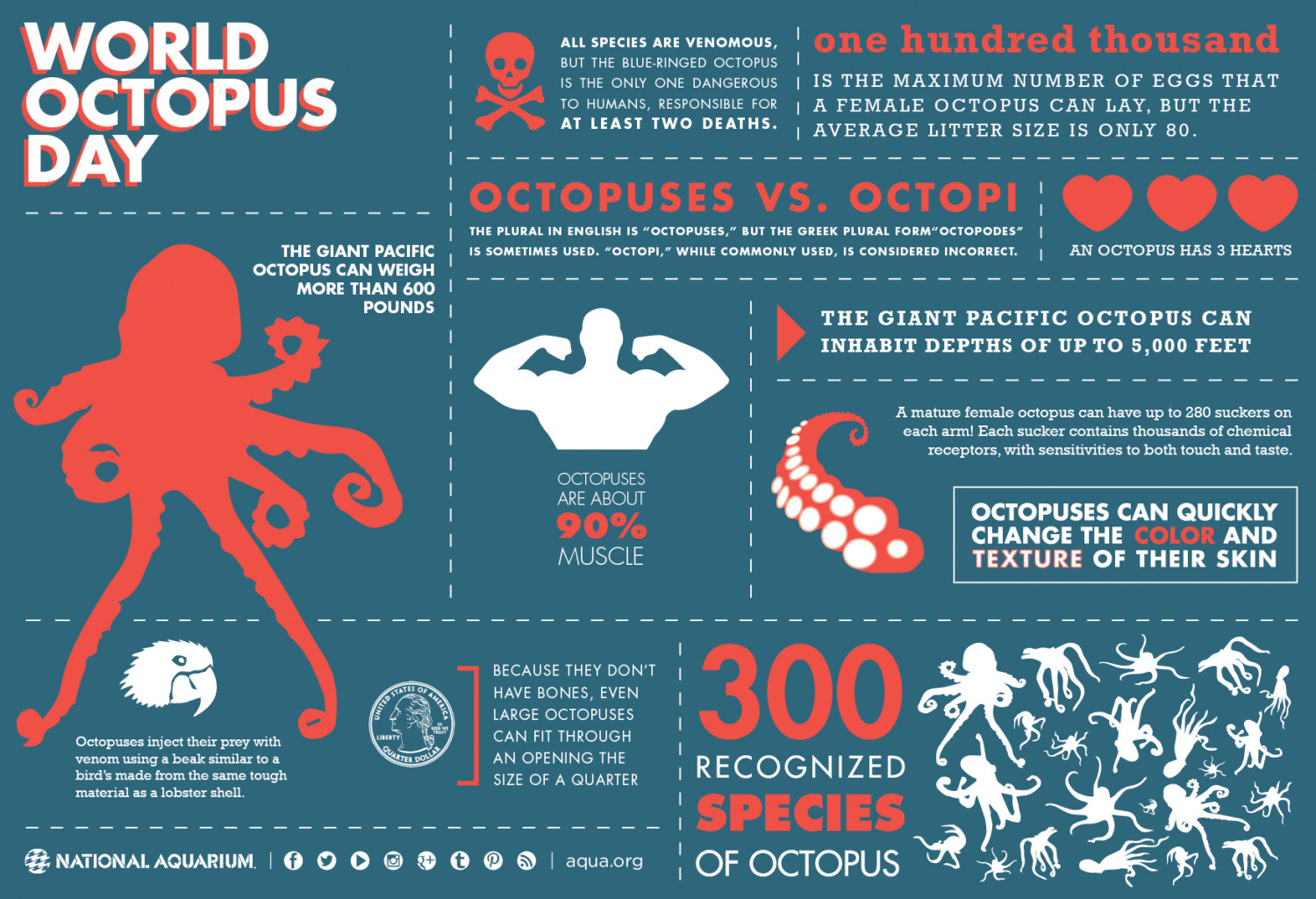 Octopus - traveling Infographic