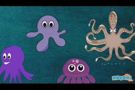 Octopus Fun Facts Infographic