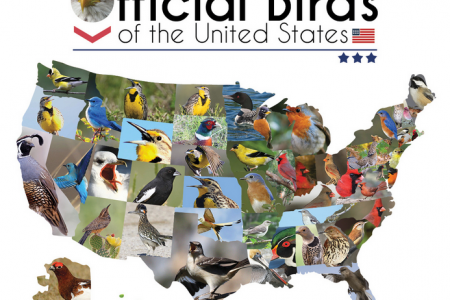 Official State Birds of the United States Infographic