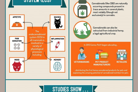 Pain and Anxiety in Pets Infographic Infographic