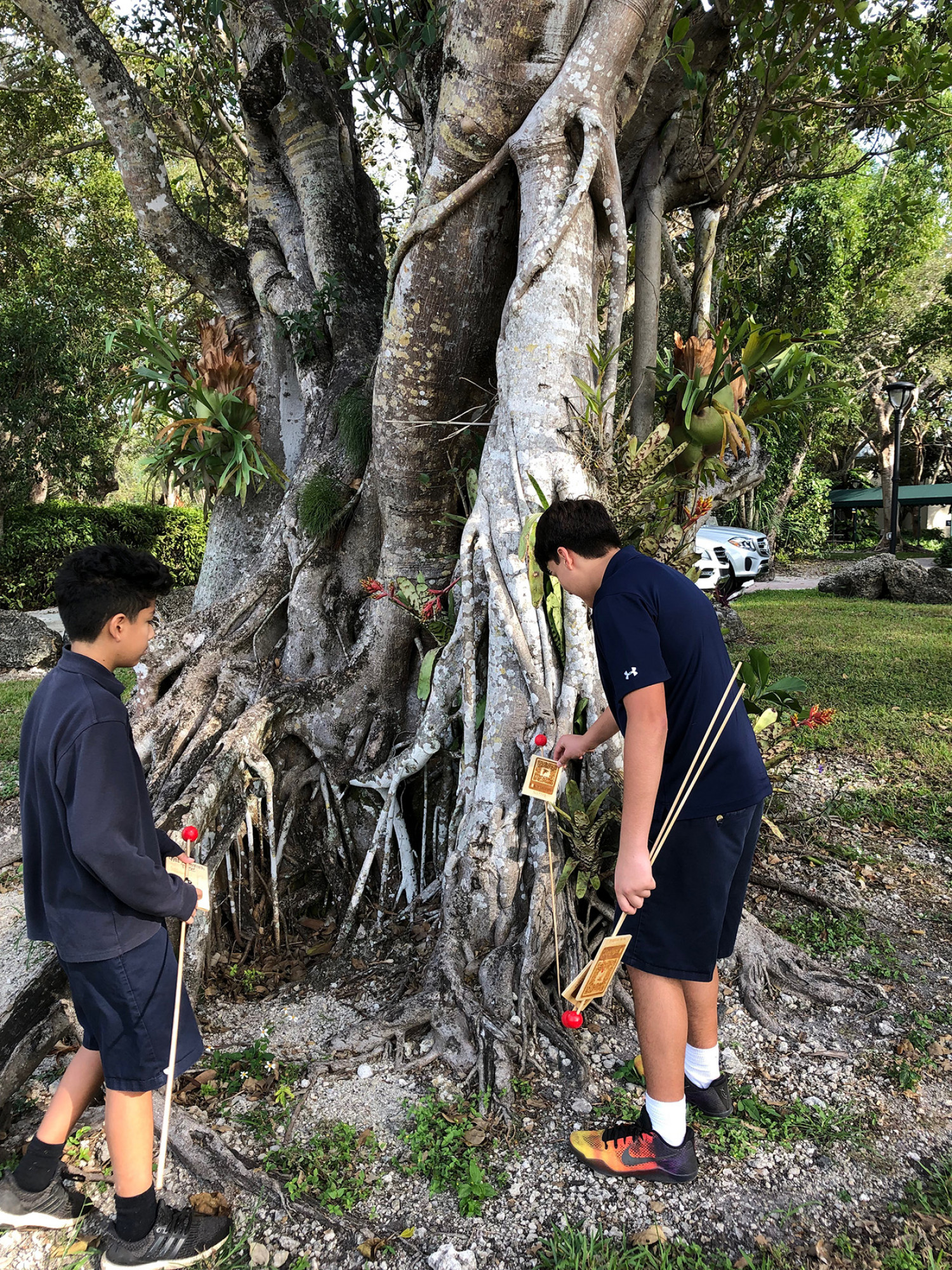 Palmer Trinity School Science Classes Use QR Codes in Tree Identification Project Infographic