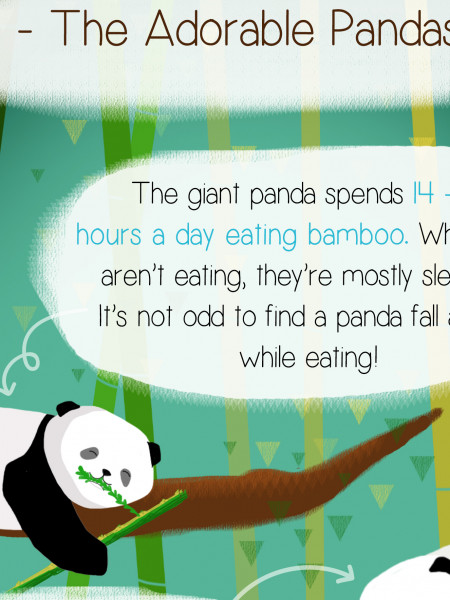 The Adorable Pandas Infographic