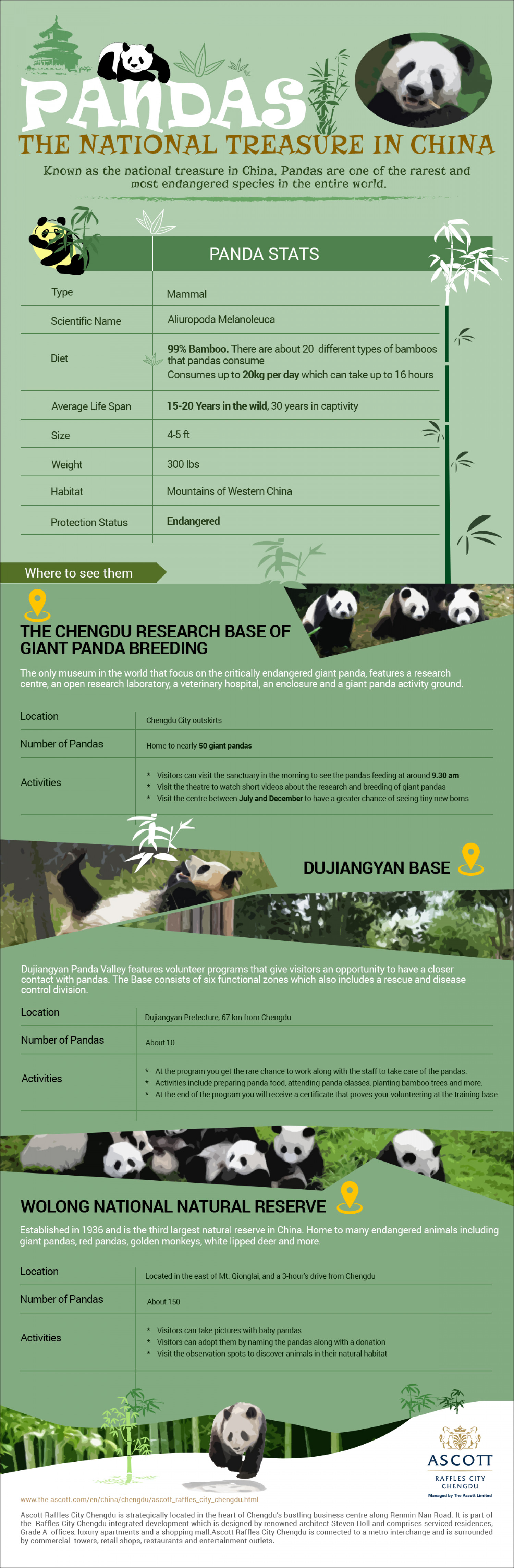 Pandas the National Treasure in China Infographic