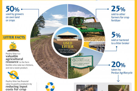 Perdue and Poultry Litter on Delmarva Infographic