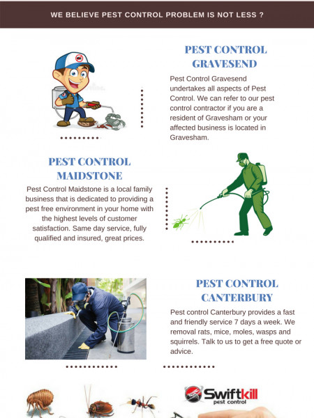 Pest Control Services in Maidstone, Canterbury  Infographic