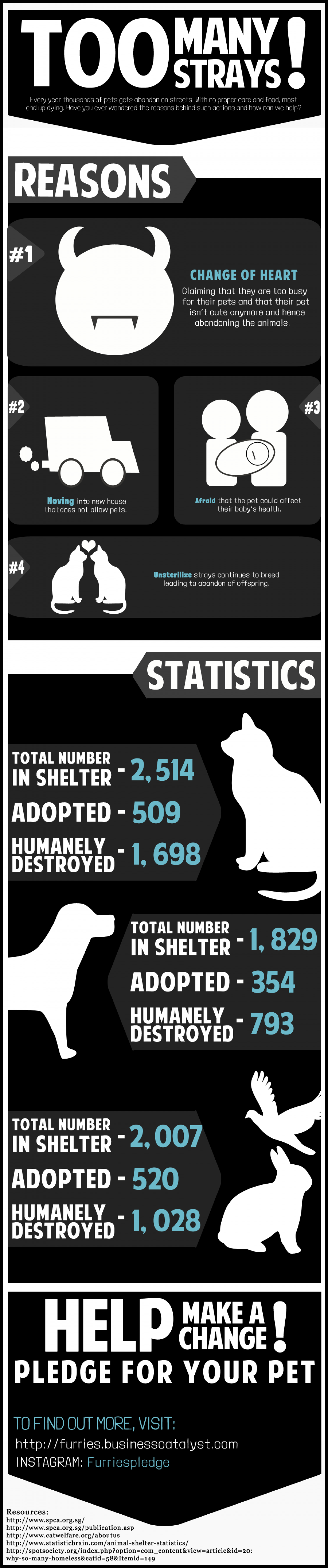 Pet Abandonment  Infographic