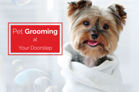 Pet Grooming Infographic