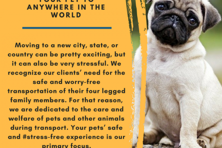 Pet Moving Service Offered By PM Relocations Infographic