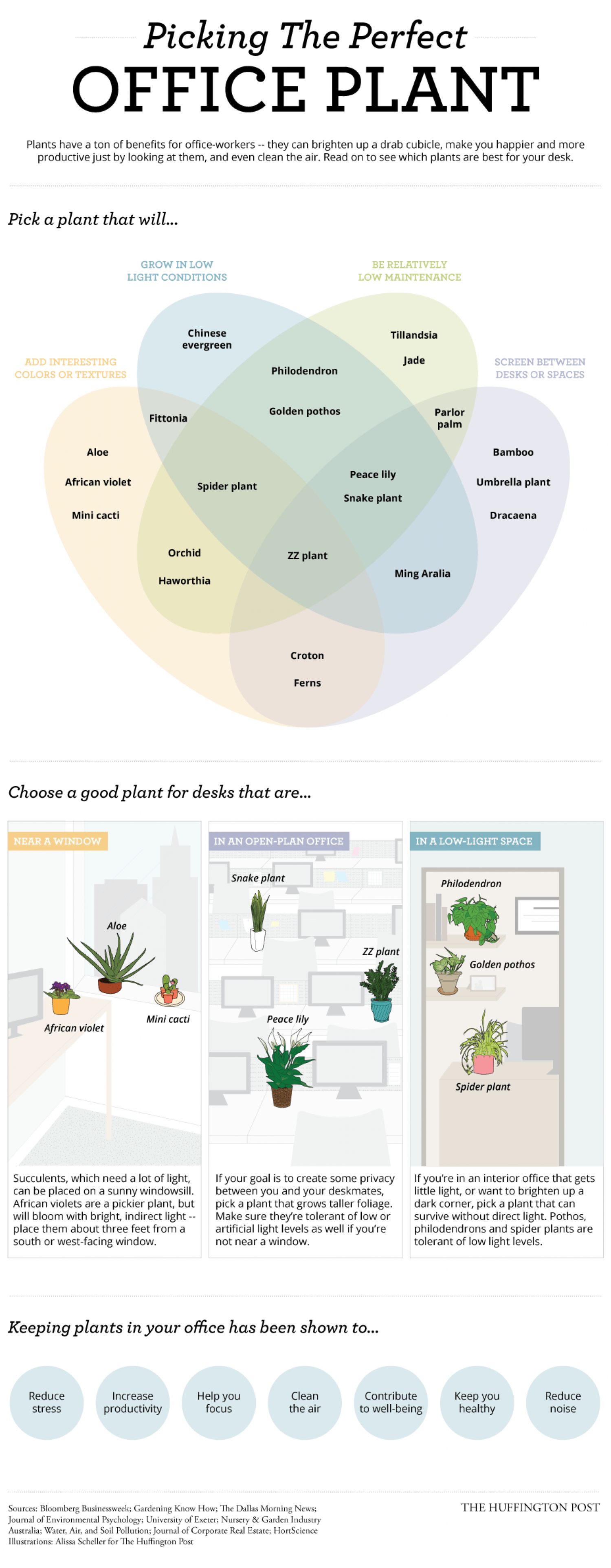 Superbe Picking The Perfect Office Plant Infographic
