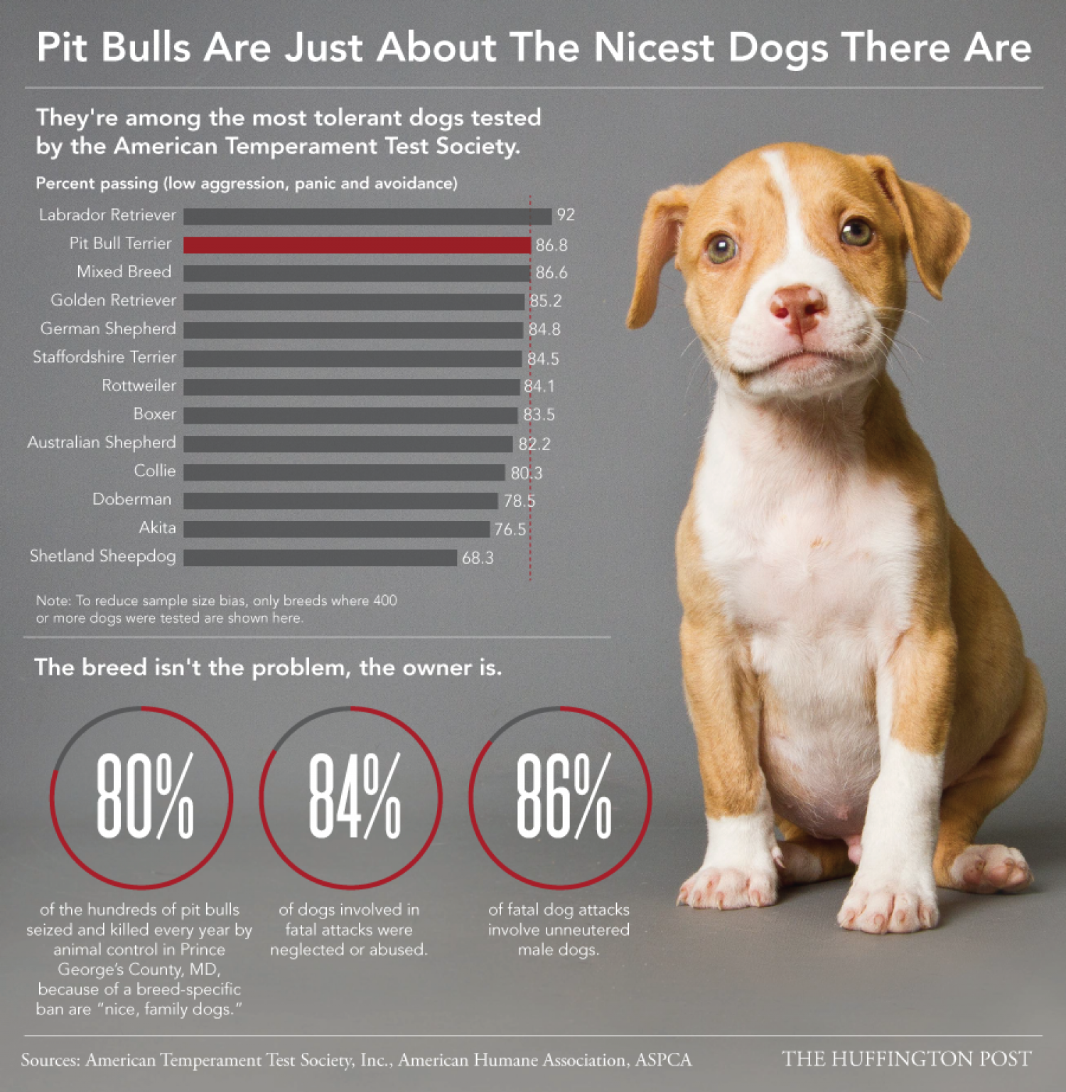 Pit Bulls Are Just About The Nicest Dogs There Are Infographic