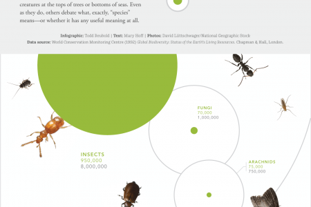Planet of the Insects Infographic