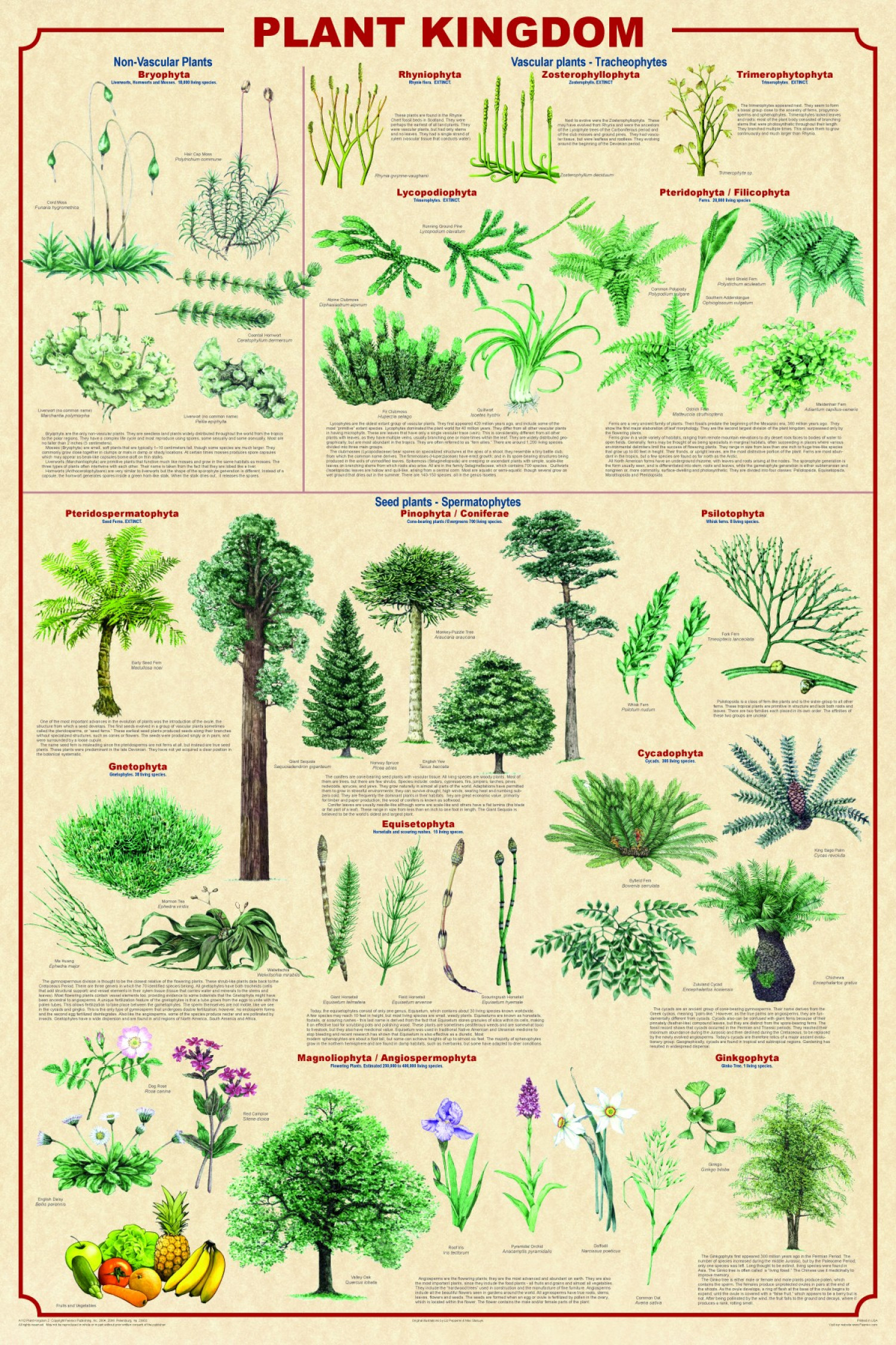 Plant Kingdom Infographic