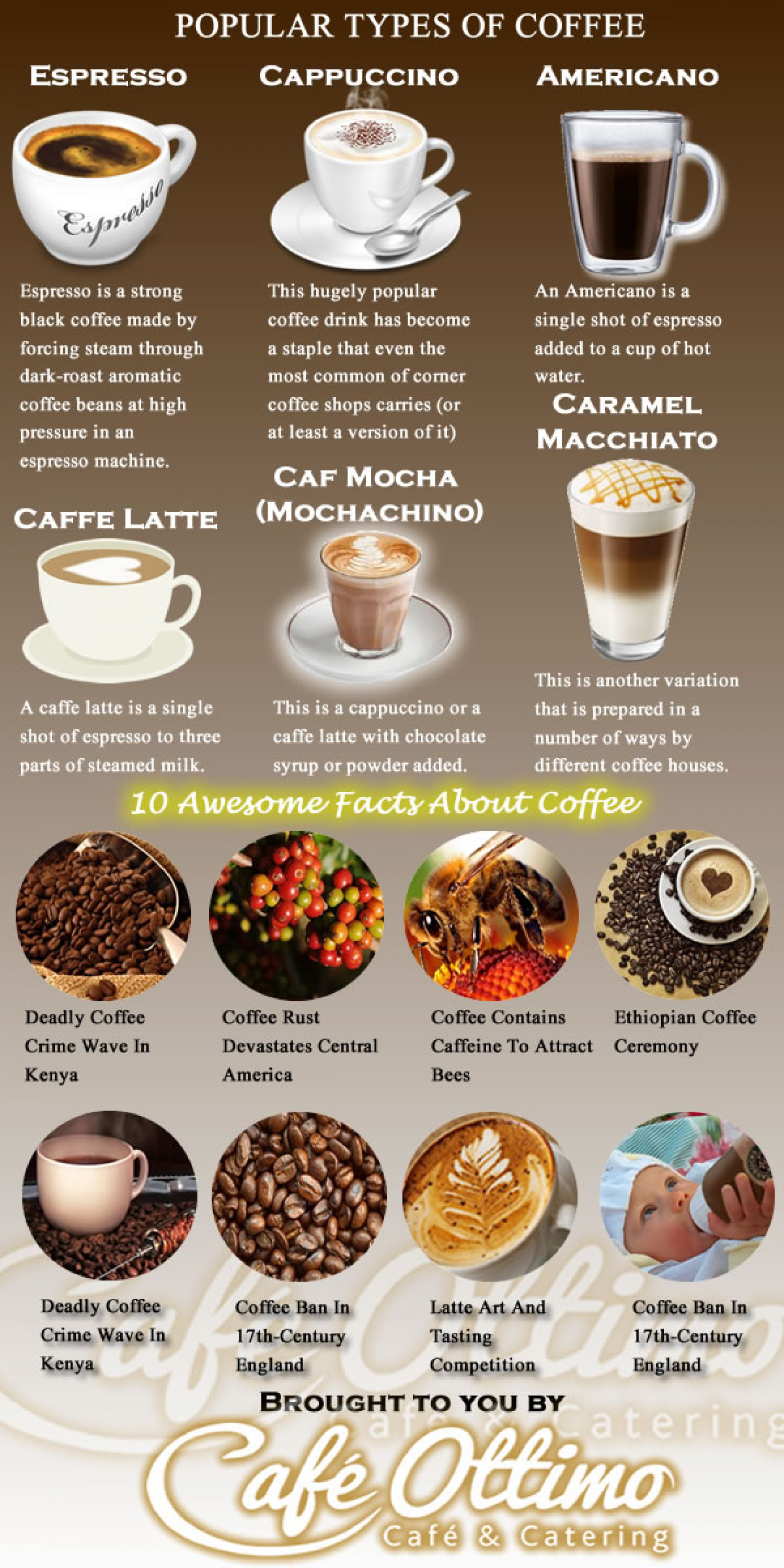 Popular Types of Coffee | Visual.ly