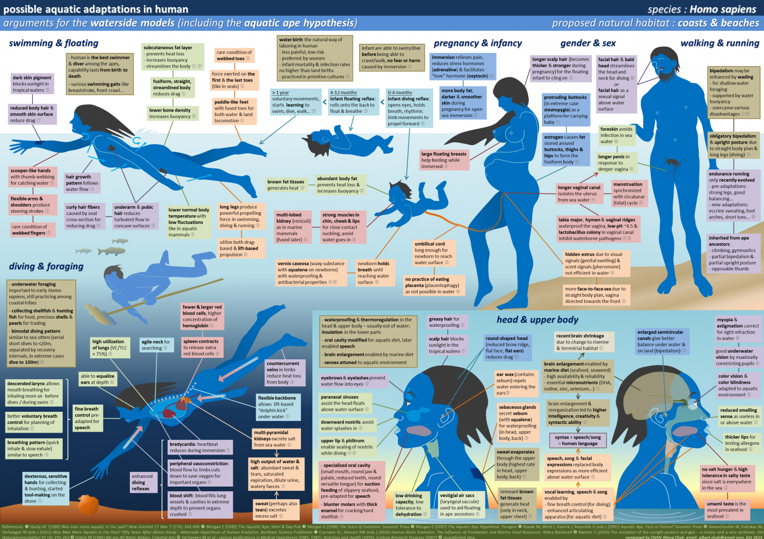 Possible Aquatic Adaptations in Human Infographic