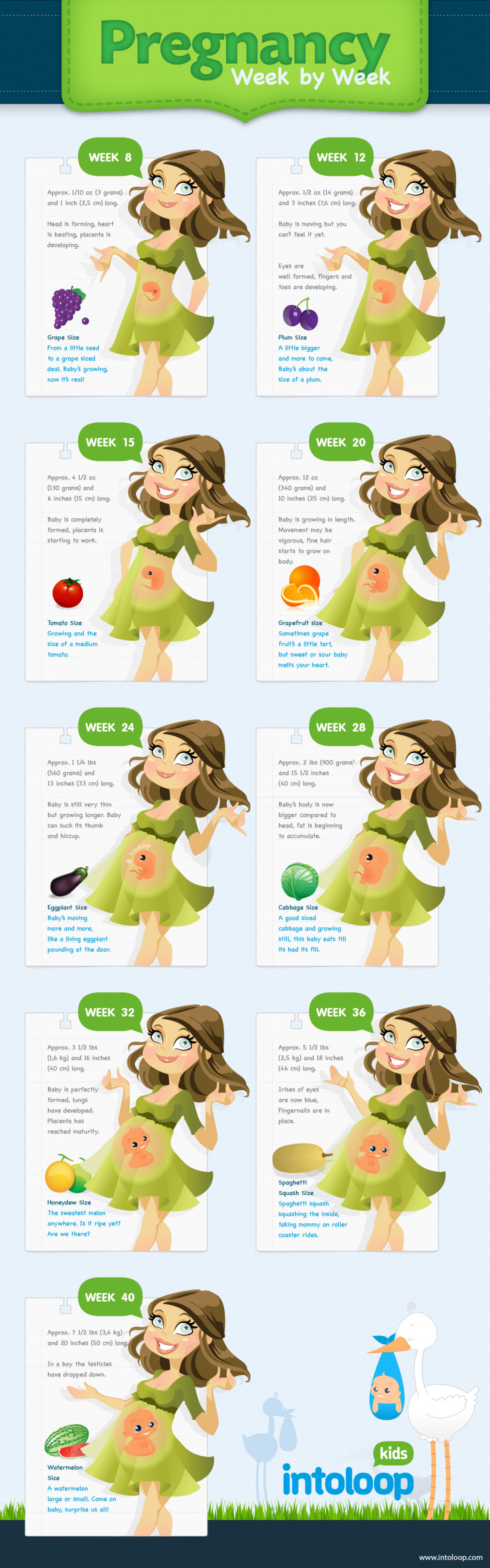 Pregnancy Week by Week Infographic