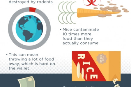 PROBLEMS CAUSED BY MICE, RATS, AND SQUIRRELS Infographic