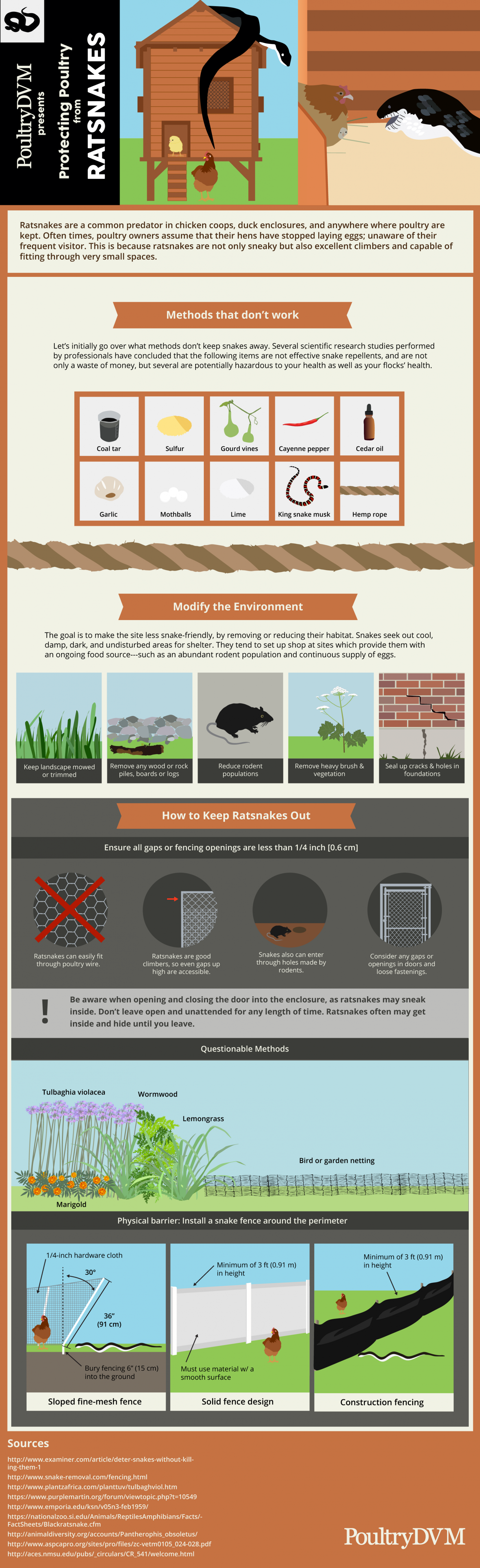 Protecting Poultry from Rat snakes Infographic
