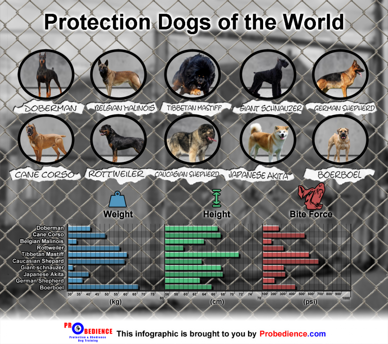 Protection Dogs of the World - An Infographic Infographic