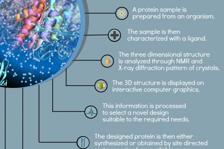 Protein Engineering - Bostonbioproducts.com Infographic
