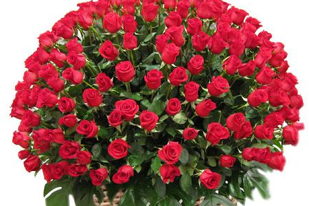 Pure Love Roses – 30 Red Roses ₹ 1,300 Infographic