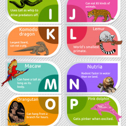 Rainforest Animals A-Z   Visual.ly