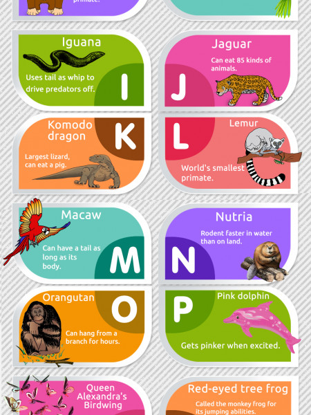 Rainforest Animals A-Z Infographic