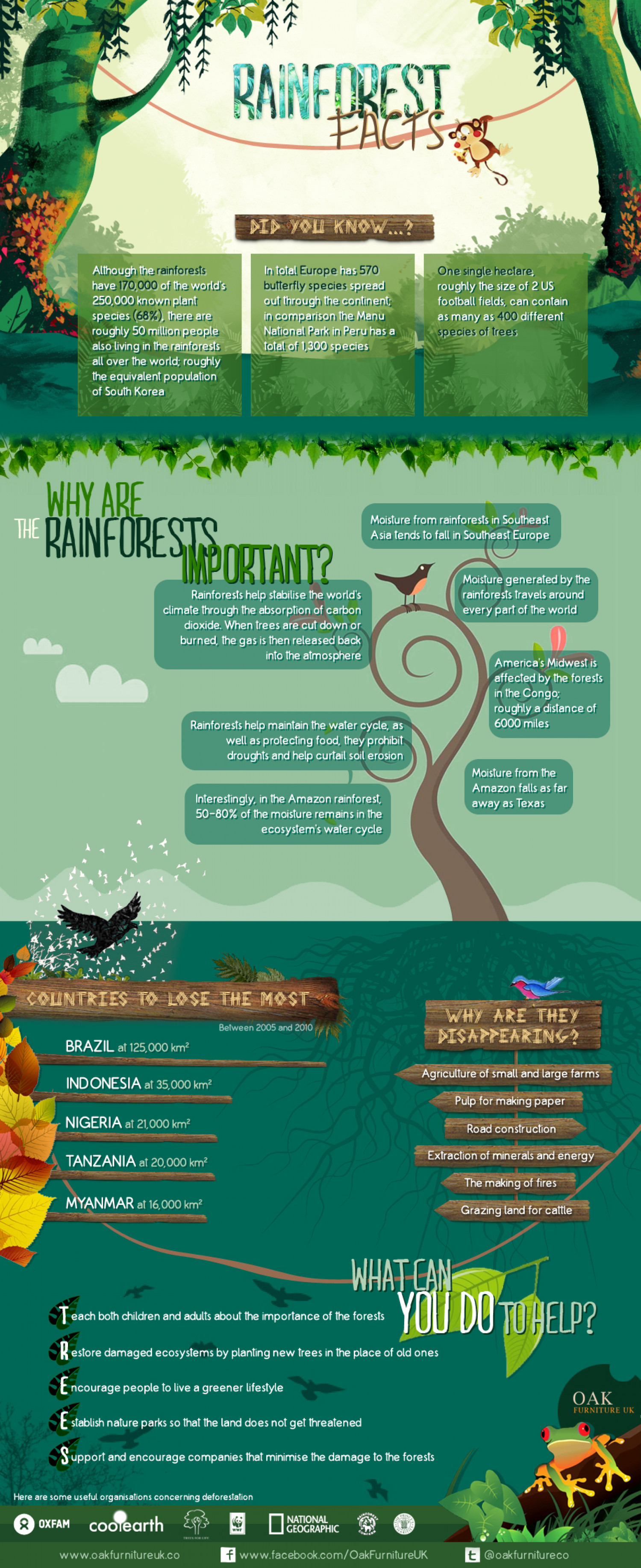 Rainforest Facts Infographic