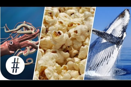 Random Numbers: Giant Squid, Popcorn & Whale Brains  Infographic