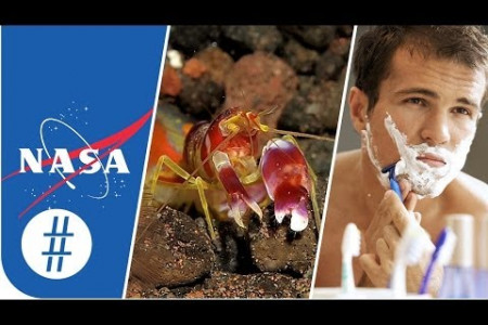 Random Numbers: NASA, Pistol Shrimps & Shaving  Infographic