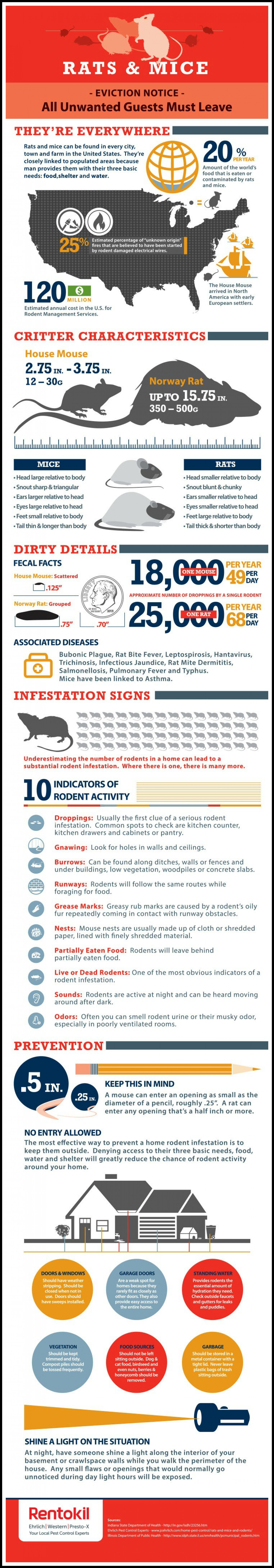 Rats & Mice: The Dirty Details  Infographic