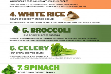 Raw Dog Food Recipe Infographic