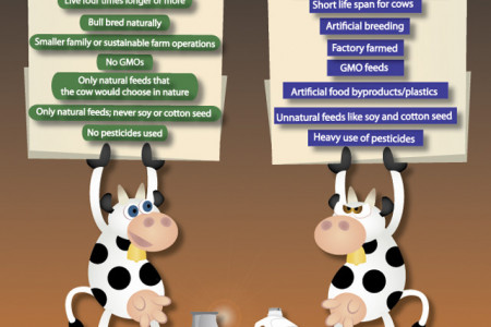 Raw Milk vs. Pasteurized Milk Infographic