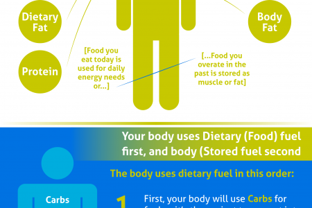 Reduce Fat From Body (How It Works) Infographic