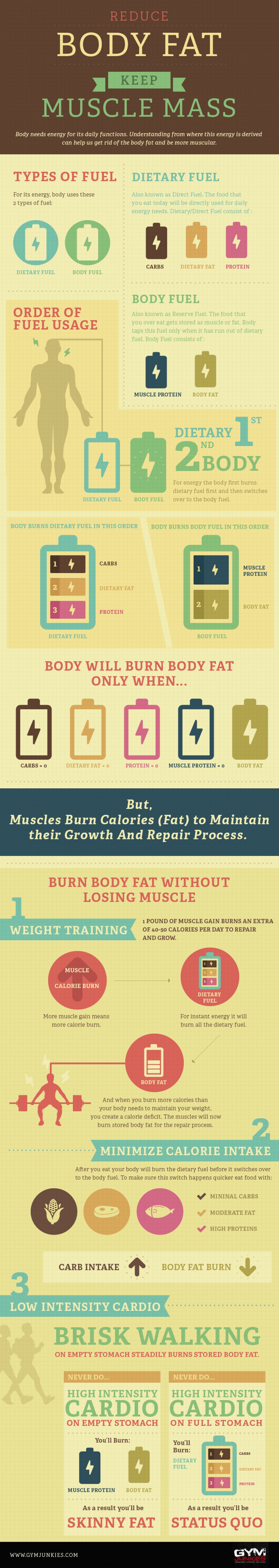 Reduce Your Body Fat Keep Muscle Mass  Infographic