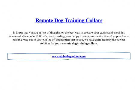 Remote dog training collars Infographic
