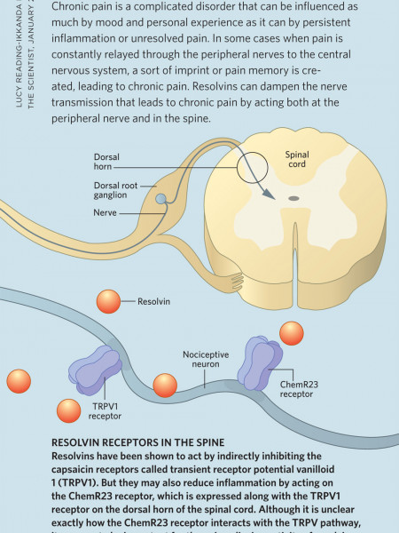 Resolvins in Chronic Pain Infographic