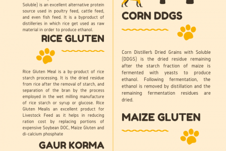 Rice DDGS Manufacturer and Supplier - Prodigy Foods Infographic