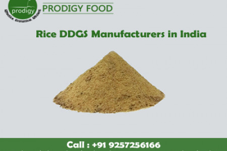 Rice DDGS Manufacturers in India Infographic
