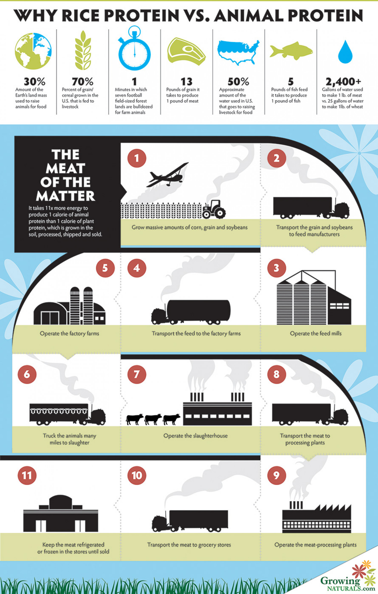 Why Rice Protein VS. Animal Protein Infographic