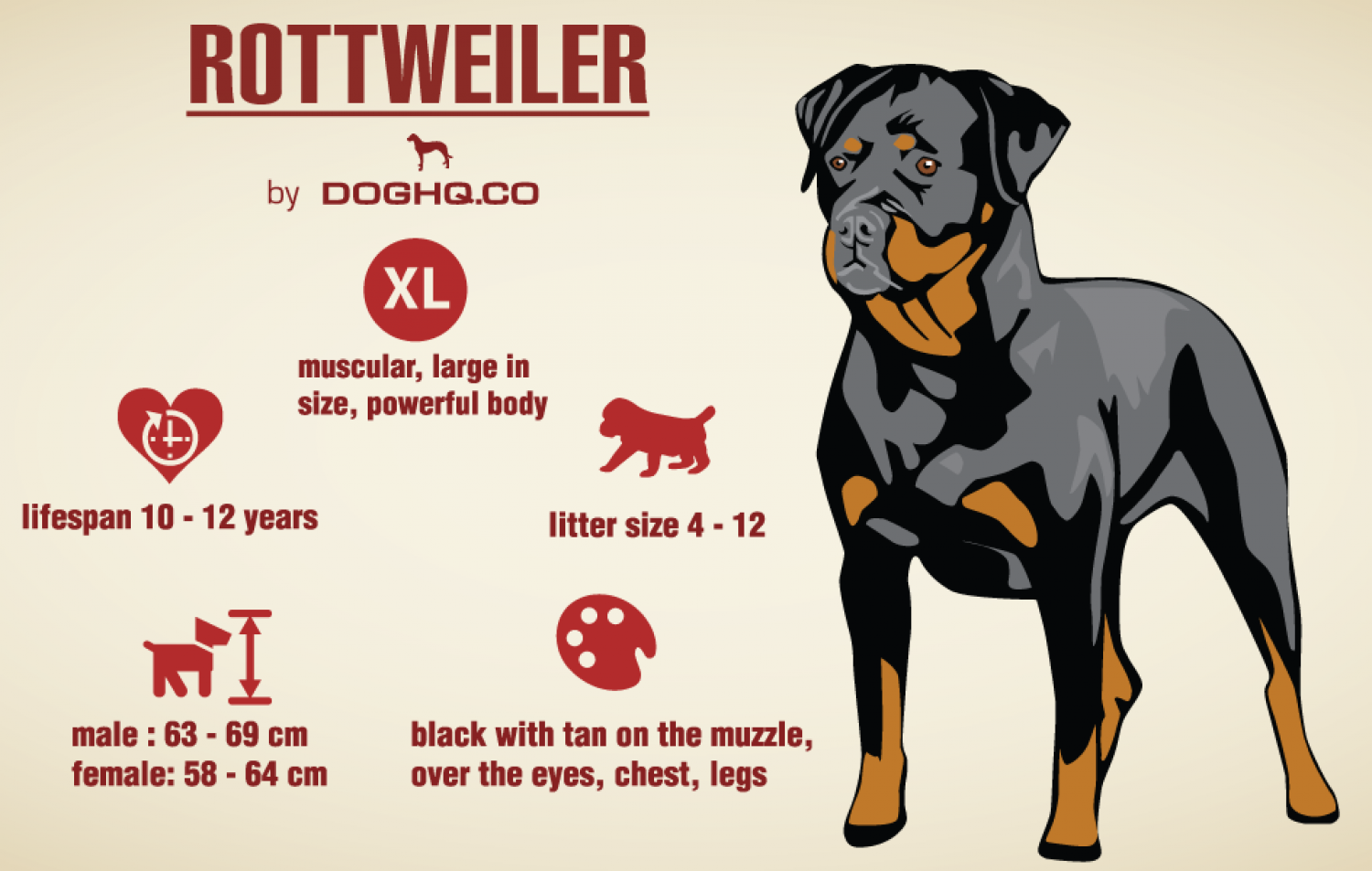 Rottweiler Infographic