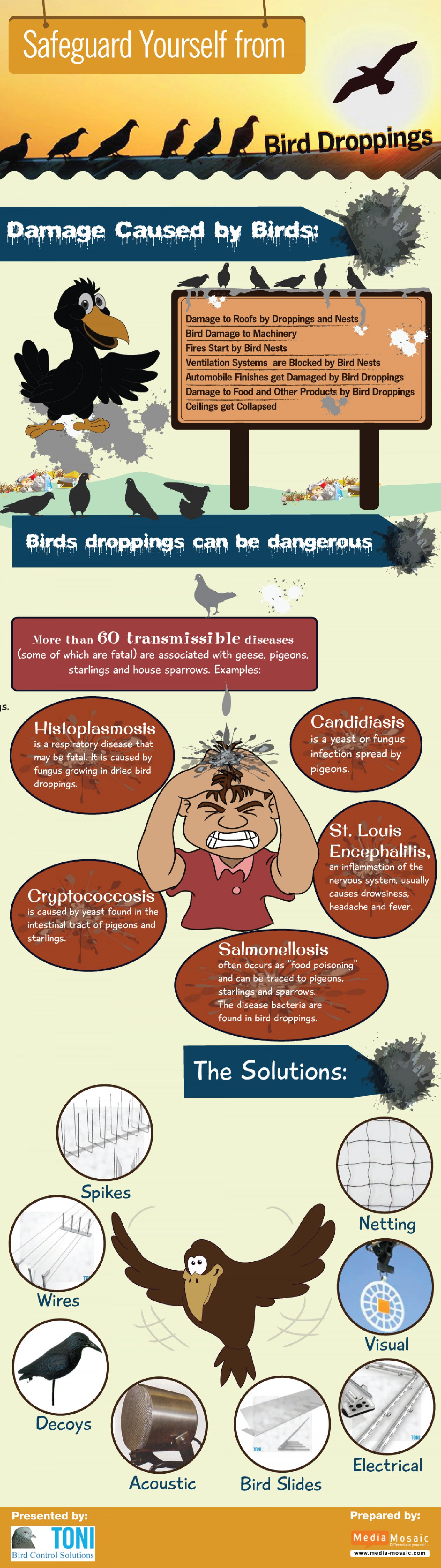 Safeguard Yourself From Bird Droppings Infographic