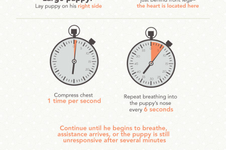 SAVE YOUR PUPPY! How to give your puppy CPR. Infographic