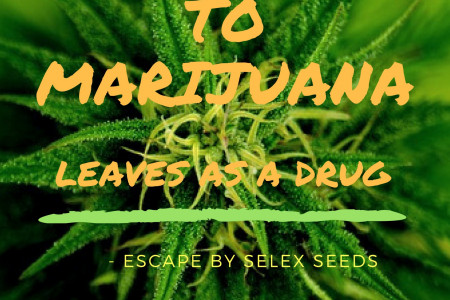 Say No To Marijuana Infographic