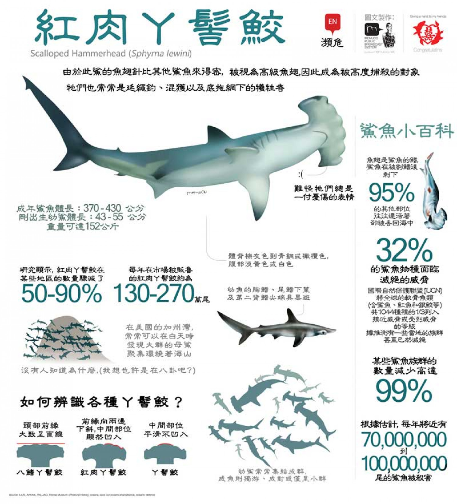Scalloped hammerhead In chinese Infographic
