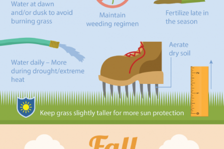 Seasonal Care for a Lush Lawn Infographic