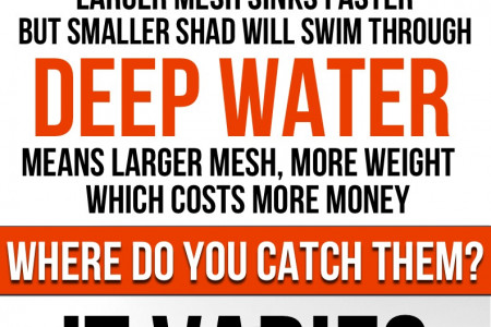 Shad For Catfish Bait: The Essential Guide Infographic